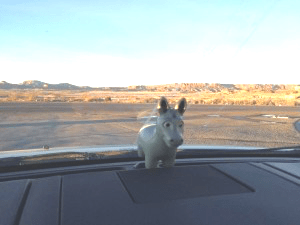 muley-on-roadtrip
